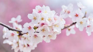 式典シーズン。春らしい!と思ってもらえる色はどんな色?